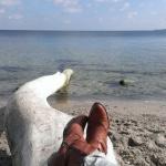 Happy Weekend Trip: Auf geht's nach Travemünde zur Ostsee