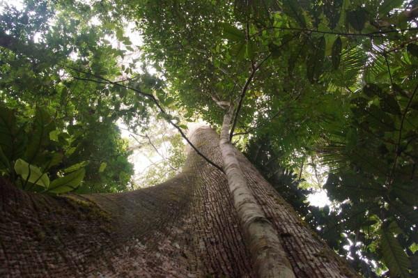 Puriy Amazonas