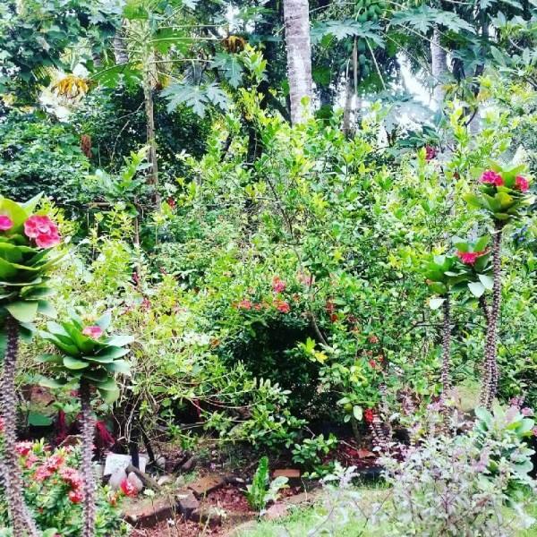 Ayurvedakur in Kerala - Der tropische, grüne Garten im Somatheeram