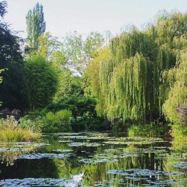 Der zauberhafte Seerosenteich von Monet.