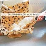 Ein Café der anderen Art: Das Katzencafé Milou in Aachen