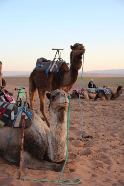 Marokko_Sahara
