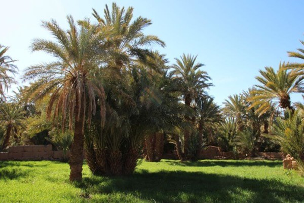 Marokko_Draa Valley