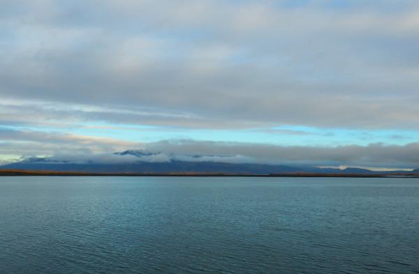 Island Elding Whale Watching