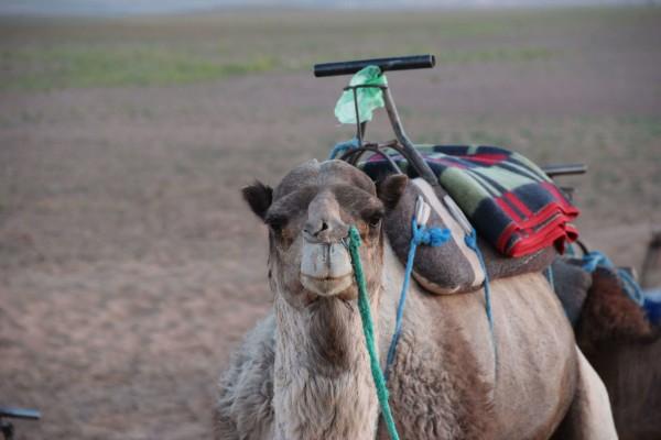 © Jaro Pustul: Das war mein Kamel :).
