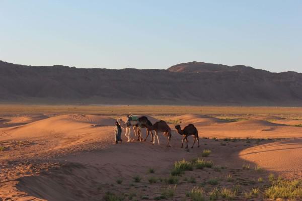 Berber bringen uns die Kamele zum weiter reiten.
