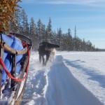Reisen & Arbeiten: 4 Jahre als Schlittenhund-Guide in Skandinavien