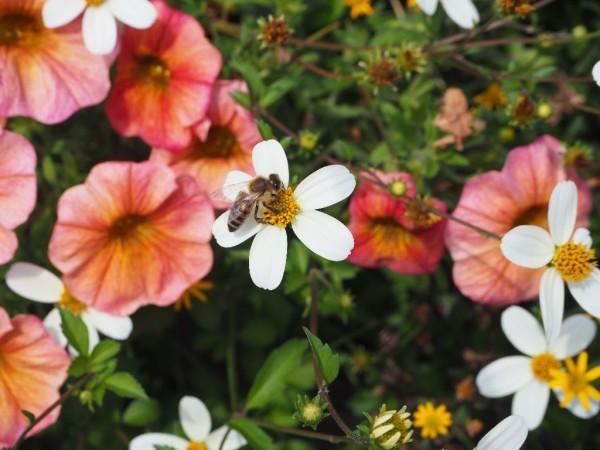 Straßburg Impressionen Biene