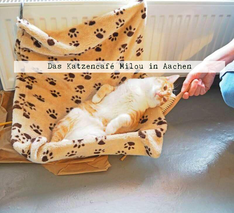 Ein Café der anderen Art: Das Katzencafé Milou in Aachen - www.bereisediewelt.de