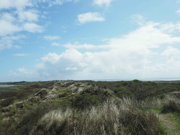 Loog Aussichtsplattform auf Dünen Juist