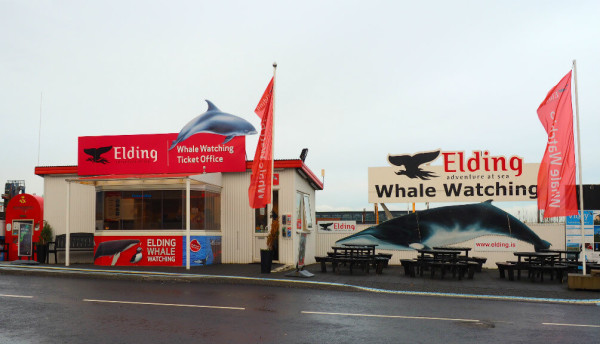 Island Elding Whale Atching