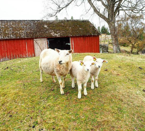 Trondelag Norwegen