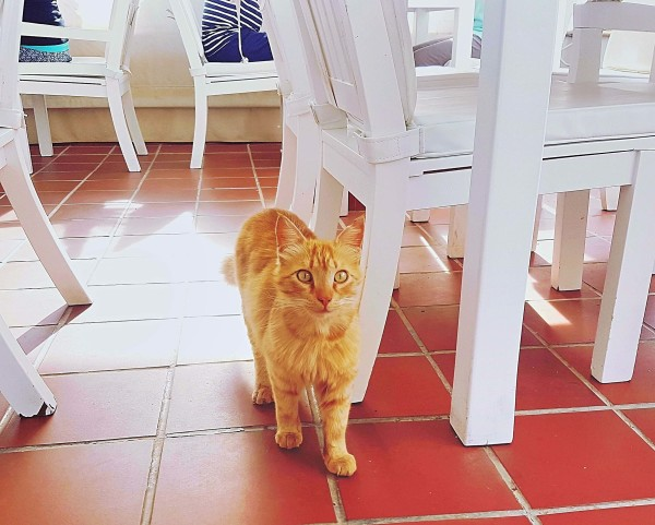 Grecian Park Hotel Katze