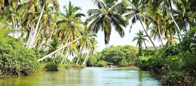 Indien Kerala Backwaters