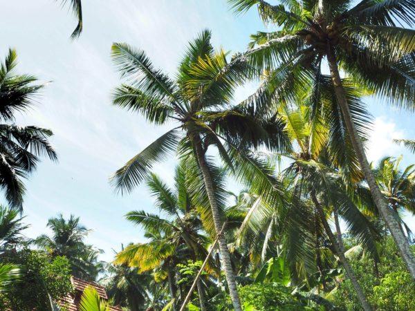 Tropenparadies Somatheeram Ayurvedic Health Resort Kerala Indien
