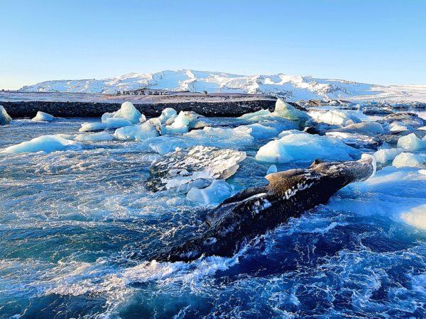 Ice Explorers Eishöhle Island Jökulsárlón