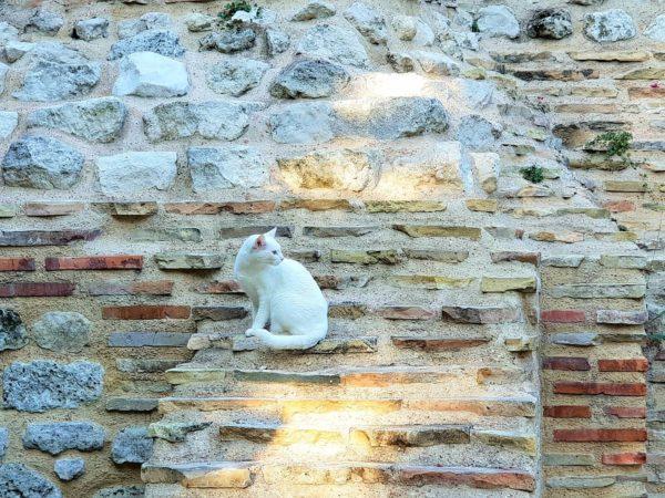 Katze Römische Thermen von Varna in Bulgarien