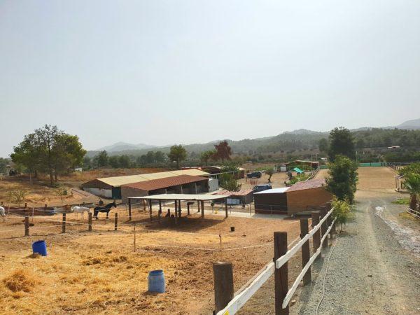 Zypern Nikosia Reitschule P. Tsaktiris Farm